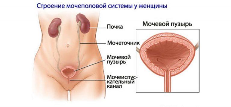 Лечение почек и мочевого пузыря в домашних условиях
