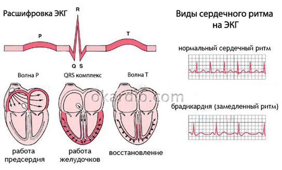 Каков нормальный пульс у взрослого человека: норма по возрастам и причины изменений