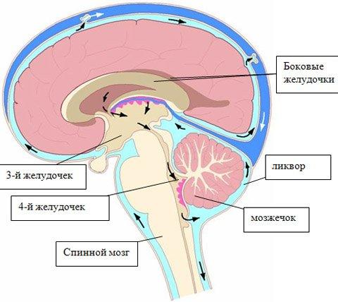 Гидроцефалия головного мозга у детей: причины, последствия и терапия