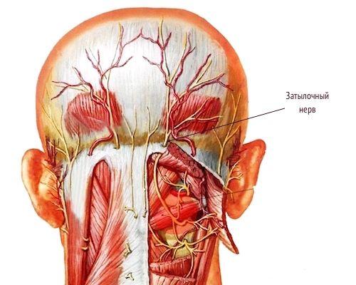 Воспаление затылочного нерва симптомы и лечение
