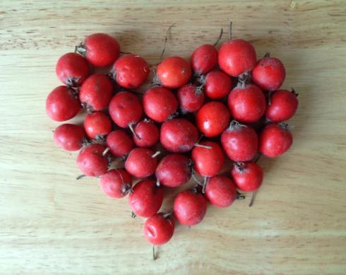 Боярышник: лечебные свойства и противопоказания, рецепты