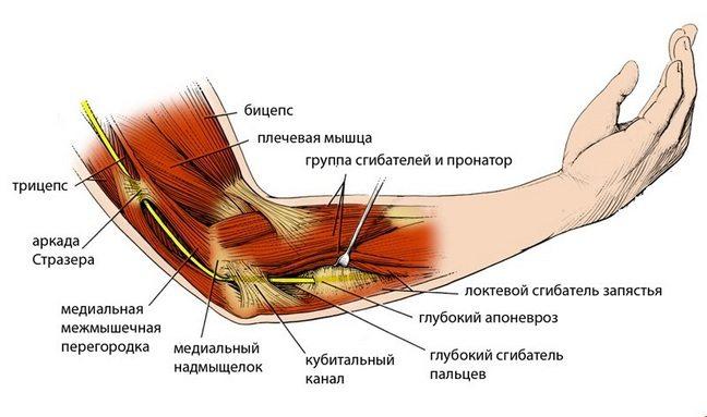 Боль в локтевом суставе при сгибании и разгибании: чем лечить, что делать