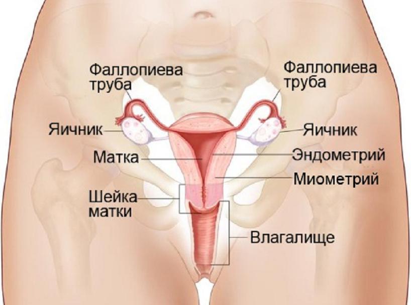 Признаки онкологии яичников у женщин