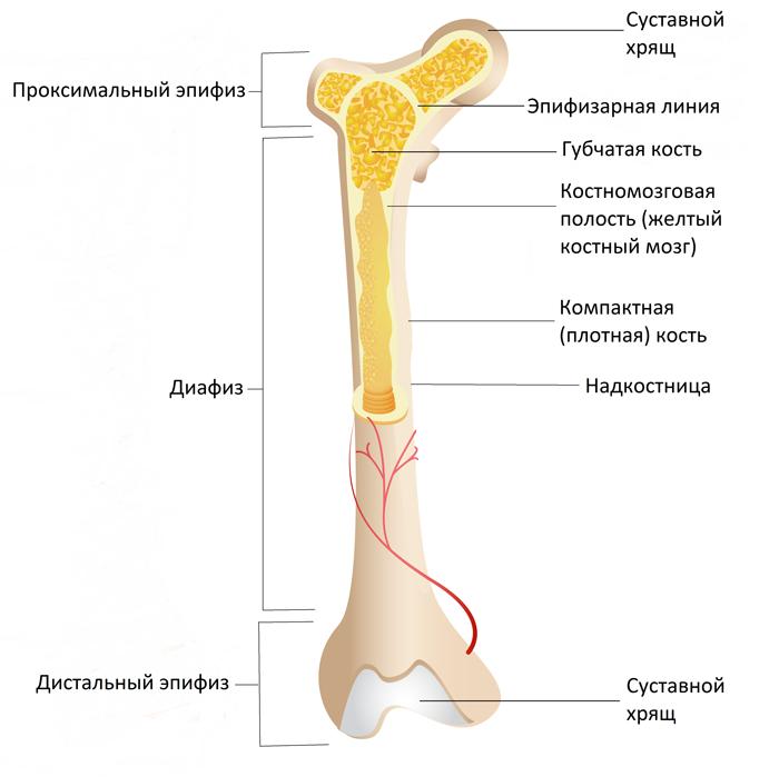 Как называется рак костей по научному