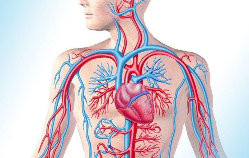 Артериальная гипертензия: что это такое, симптомы, лечение у взрослых