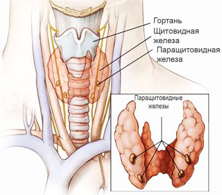 Гипопаратиреоз лечение препаратами